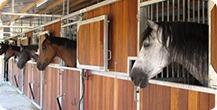 پانسیون و نگهداری اسب